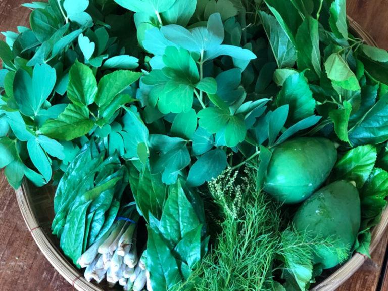 自然栽培の島ハーブ 沖縄県石垣島